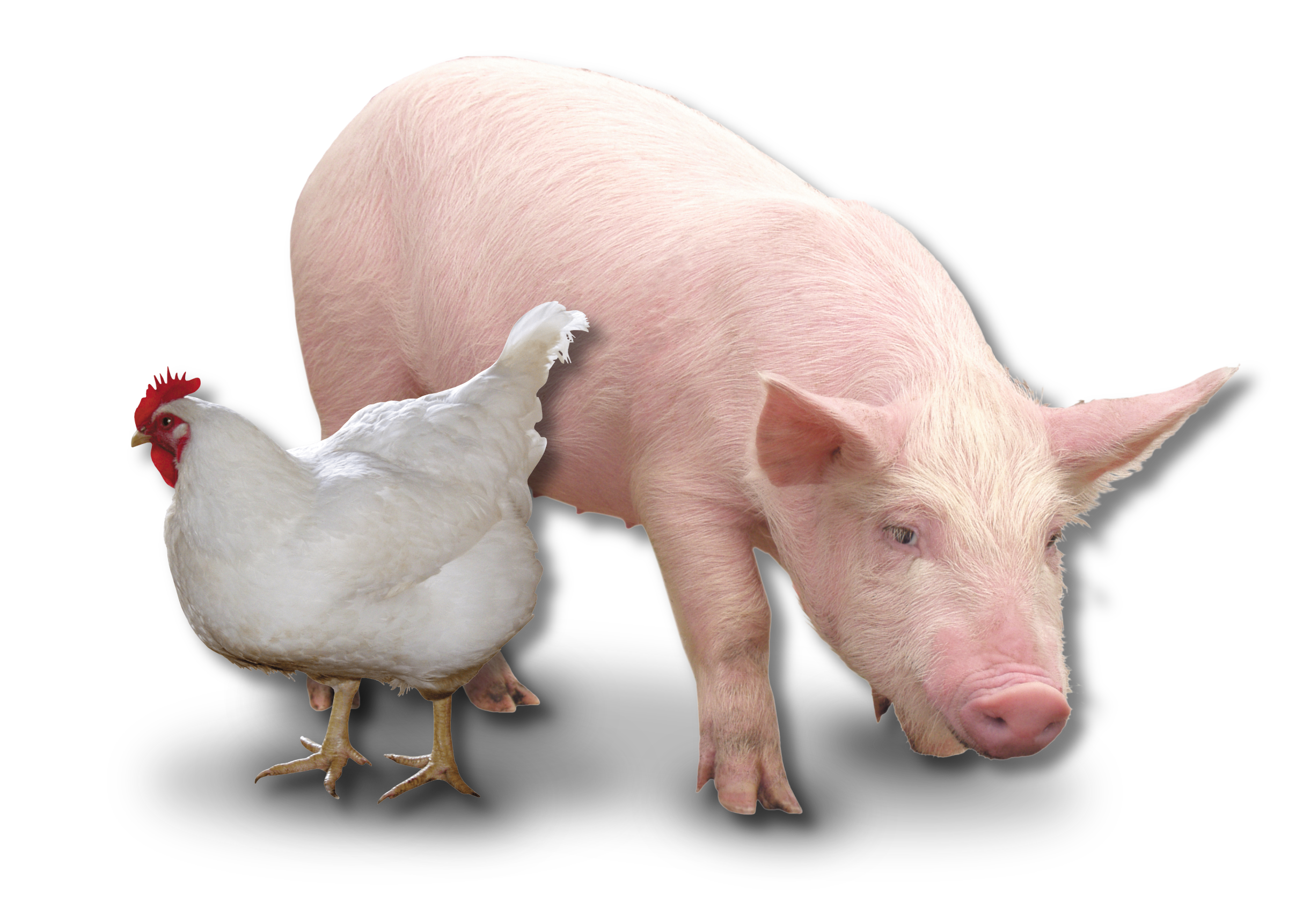 feedview inventory management - pig and poultry